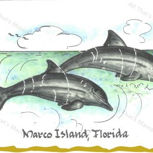 Marco Island Dolphins